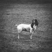 North Yorkshire Fieldsports Photographers – The Oswaldkirk Shoot Part II