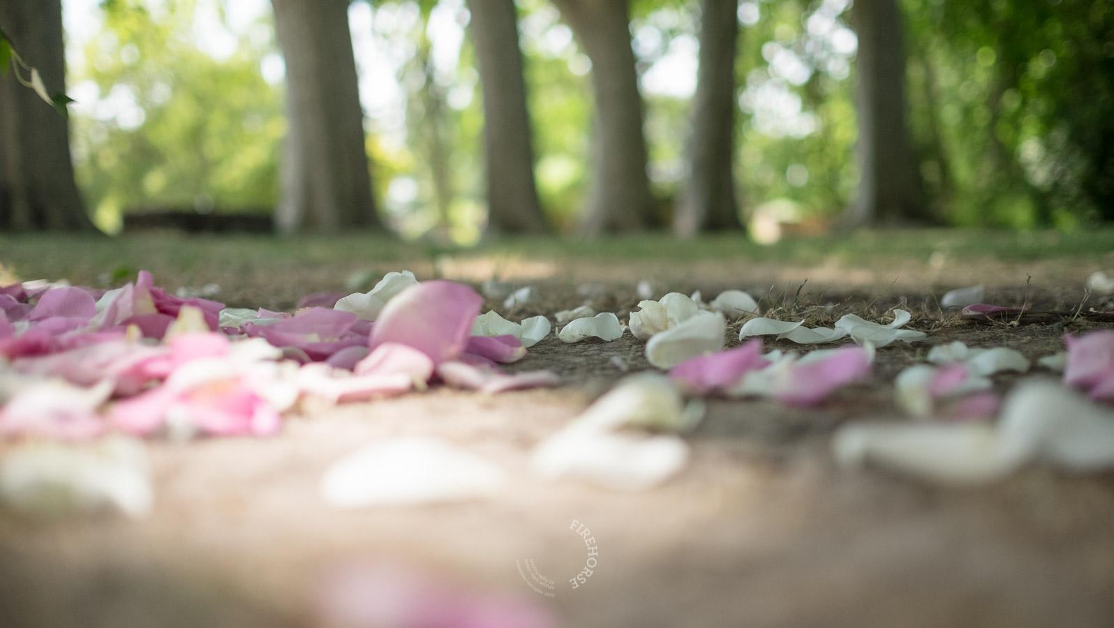 Provence-Wedding-Photography-012